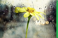 Spring Showers should not dampen your mood or your hair.